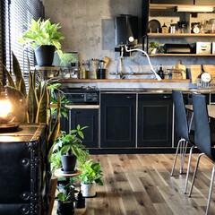 間接照明のある暮らし/観葉植物のある暮らし/団地キッチン/団地インテリア/団地DIY/インダストリアルインテリア/... キッチンに貼っていた白タイルのリメイクシ…
