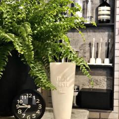 ネフロレピス/観葉植物のある暮らし/洗面所DIY/洗面所インテリア/インダストリアルインテリア/歯磨き粉カバー/... 久しぶりの洗面所。  特に変わり映えはし…(2枚目)