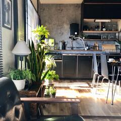 ブランチ/簡単おやつ/スコーン/観葉植物のある暮らし/コンクリート壁紙/団地のキッチン/... 3連休の2日目。  普段、朝食は殆ど食べ…