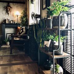 コンクリート風壁紙/観葉植物のある暮らし/ハイドロカルチャー/男前インテリア/インダストリアルインテリア/団地インテリア/... ハイドロカルチャー始めました。  我が家…