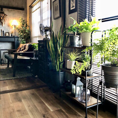 クッションフロア/観葉植物初心者/観葉植物インテリア/観葉植物のある暮らし/アジアンタム/ポトスライム/... お友達からポトスを頂きました。  最近グ…
