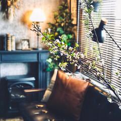 マントルピース/桜の枝/桜/フェイクグリーン/男前インテリア/インダストリアルインテリア/... 母が買ってくれた桜の枝飾りました🌸 まだ…