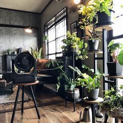 ドウシシャ/サーキュレーター/間接照明のある暮らし/間接照明/観葉植物のある暮らし/団地インテリア/... もう使っている方も多いと思いますがサーキ…(1枚目)