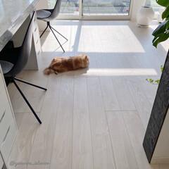 犬と暮らす/モノトーンインテリア/フローリング/犬と暮らす家/北欧インテリア/海外インテリア 今日は寒かったからか、床暖房のきいたリビ…