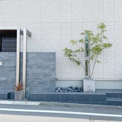 エクステリア/外構/植栽/シンボルツリー/モノトーンインテリア 引きで撮ってみました。玄関横のエクステリ…