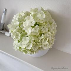 花のある暮らし/ビバーナム/北欧インテリア/北欧雑貨/cooee/ホワイトインテリア/... 庭で大きく育ちすぎたビバーナムスノーボー…