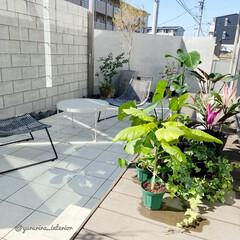 みどりのある暮らし/観葉植物/庭/庭のある暮らし/ウッドデッキ/エクステリア よく晴れた日は室内の観葉植物たちも庭に集…