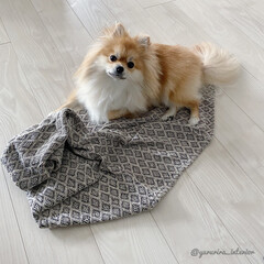 ブランケット/ソストレーネグレーネ/北欧雑貨/モノトーン/犬と暮らす ソストレーネグレーネでモロッコテイストで…
