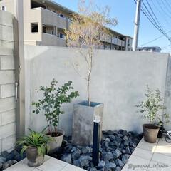 庭/庭のある暮らし/みどりのある暮らし/モルタル壁/エクステリア 暖かくなってきたので、庭活開始です!庭の…