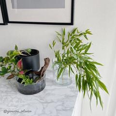 七夕/笹の葉/ホワイトインテリア/モノトーンインテリア/海外インテリア/IKEA/... 笹の葉の横には、新しく作った寄せ植えを。…