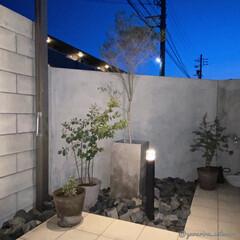 庭/庭のある暮らし/みどりのある暮らし/タイルデッキ/モルタル壁/コンクリート鉢/... モルタル壁と植物の組み合わせがお気に入り…