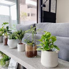 観葉植物/みどりのある暮らし/IKEA/イケア/花瓶/寄せ植え/... IKEAのガラス花瓶で作った寄せ植えは2…