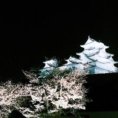 ライトアップ/桜/観桜会/夜桜/姫路城/春のフォト投稿キャンペーン/... お城の日に夜桜見物🌸 毎年見るけど、感動…