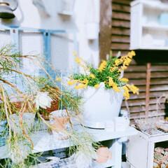 セルリア/お庭/ガーデン雑貨/ガーデン/cando/りんご箱/... 写真は撮れなかったけど、黄色い蝶々εïз…