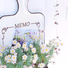 花のある暮らし/ホワイトナチュラル/ホワイトインテリア/廊下/ハートカズラ/salut/... 冬にお迎えした花かんざしが満開です❁❀✿…