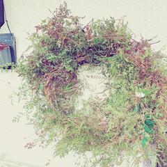 フレッシュリース/手作り/リース/ウエルカムボード/玄関/春のフォト投稿キャンペーン/... お庭の草むしりついでに、伸び放題の蔦をく…