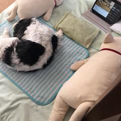 介護/BGM/16歳/キャバリア/シニア犬 最近はすごいですね!わんこが落ち着くBG…