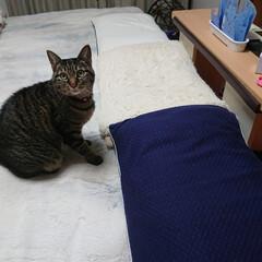 枕カバー/しまむら 枕カバーはしまむらのものでシンプルに😆 …