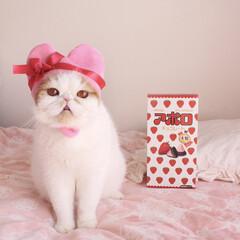 うちのこベストショット/LIMIAペット同好会/ペット/ペット仲間募集/猫/にゃんこ同好会/... ボクぶちょお! よろしくにゃ♡