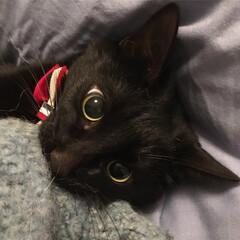 とっておきの一枚/うちの子ベストショット/黒猫/ねこ/ペット/ねこ好き/... とっておきの1枚💖💖💖😍