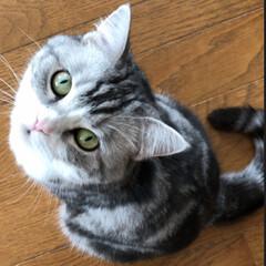 道民/まりも/クロス/フクロウ/北海道/cat/...  まりもの背中(模様)は 幸せがいっぱい…