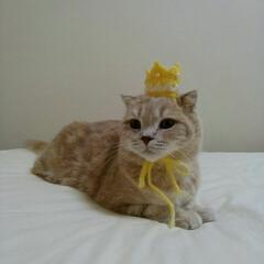 うちの子ベストショット 猫の日だから女王様になって😹💕