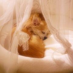 おやすみショット ふわふわのベッドが大好き❤