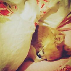 おやすみショット あれ~私の布団で寝ちゃった!