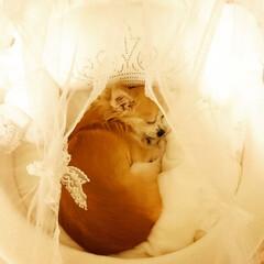 おやすみショット 天使の寝顔に癒やされます…˖*