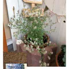 セダム/トリフォリウム/リトルチュチュ/ラッキークローバー/スーパーベルダブルピンクイップル/サフィニアアートももいろハート/... 今からの季節のお花。 ついつい黄色を選び…(2枚目)