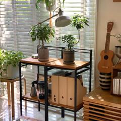 IKEA/リメイク棚/観葉植物/観葉植物のある暮らし/北欧インテリア/北欧ナチュラル/... お久しぶりです。  リビングの窓ぎわ。観…