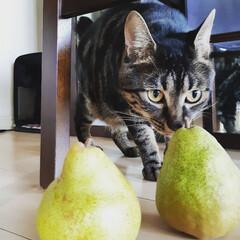 猫のいる暮らし/お弁当/住まい/暮らし/手土産 お土産ニャン❕ H[いい匂い⁉️] Ho…