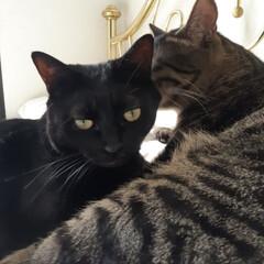 ネコ/暮らし/猫の居る暮らし ママ(黒猫)と内緒話⁉️ モモ太🐾