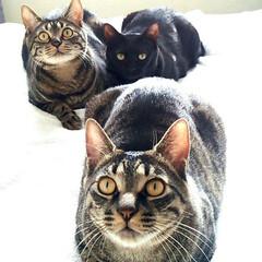 LIMIAペット同好会/猫/うちの子ベストショット 仲良しfamily🐾黒猫がママ🐱