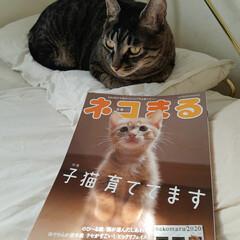 猫/リミアな暮らし/住まい/おすすめアイテム/暮らし 今月号(21日発売学校 『ネコまる』載っ…(1枚目)