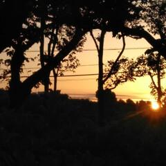 朝のお散歩/はるうらら/リミアな生活/お出かけ きのうと一昨日の朝🌄4時頃に撮った朝の景…(3枚目)