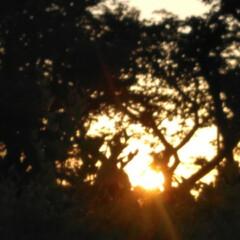 朝のお散歩/はるうらら/リミアな生活/お出かけ きのうと一昨日の朝🌄4時頃に撮った朝の景…(6枚目)