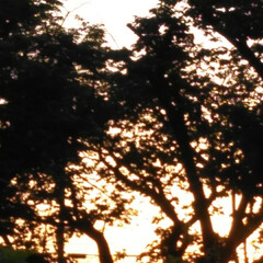 朝のお散歩/はるうらら/リミアな生活/お出かけ きのうと一昨日の朝🌄4時頃に撮った朝の景…(5枚目)