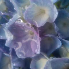 雨のモチーフ/お出かけ/雨の日の過ごし方/紫陽花大好き/雨の日も楽しく/暮らし おはようございます😀 この写真が最近撮っ…