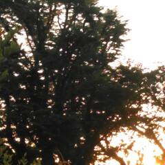 朝のお散歩/はるうらら/リミアな生活/お出かけ きのうと一昨日の朝🌄4時頃に撮った朝の景…(7枚目)