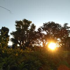 朝のお散歩/はるうらら/リミアな生活/お出かけ きのうと一昨日の朝🌄4時頃に撮った朝の景…(1枚目)