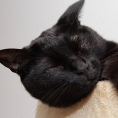 黒猫/寝顔/丸顔/頬っぺた/うちの子ベストショット 眠たくなると丸顔がより一層丸くなります
