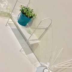 雑貨だいすき/東京インテリア/観葉植物/アロマディフューザー/ニトリ/3COINS/... 食器棚の上♪
