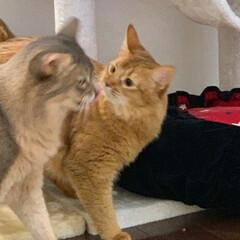 ネコジャボン/猫大好き/nekonobi/猫好きさんと繋がりたい/ソマリ/LIMIAペット同好会/... 仲良く何か話してる❓