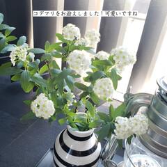 花を楽しむ/花のある暮らし/コデマリ/クエン酸水スプレー/トイレ掃除/掃除/... こんばんは🌃 .  . 今日のこそうじは…(6枚目)