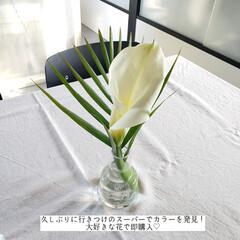 スーパーの花を楽しむ/花を楽しむ/花のある暮らし/ホームリセット/バス用メッシュクロス/そうじの神様/... こんばんは🌃 . . 今日のこそうじは、…(9枚目)
