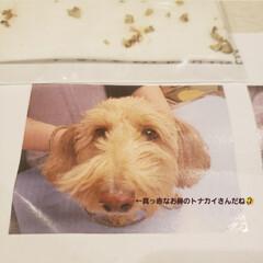 マルックス同好会/ミックス犬同好会/ミックス犬/マルックス/歯石取り 昨日は、我が家の愛犬マックスの初の歯石取…(4枚目)