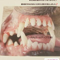 マルックス同好会/ミックス犬同好会/ミックス犬/マルックス/歯石取り 昨日は、我が家の愛犬マックスの初の歯石取…(3枚目)
