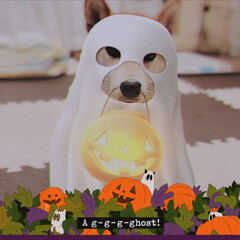 柴犬/わんこ同好会/猫派の旦那と犬派のわたし/ハロウィン2019/フォロー大歓迎 👻Happy   halloween🎃 …