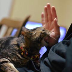 保護猫/猫派の旦那と犬派のわたし/フォロー大歓迎/LIMIAペット同好会/にゃんこ同好会/暮らし/... ダーリン💢💢  また、嫁と話してたでしょ…